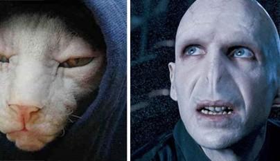 Gato Voldemort