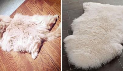 Gato alfombra