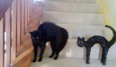 Gato decoracion de Halloween