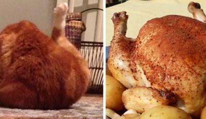 Gato pollo asado