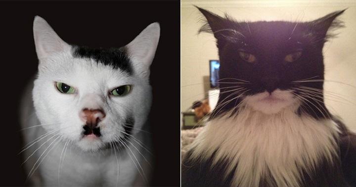Parecidos razonables gatos