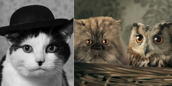 Parecidos razonables gatos1