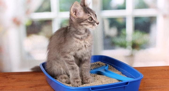 arena gatos ecologica