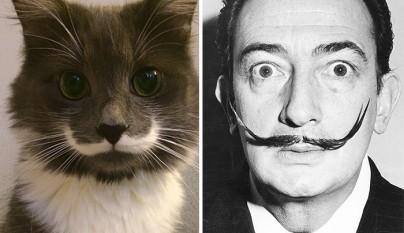 gato Salvador Dali