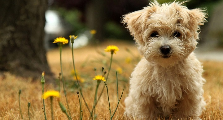 perros pequenos