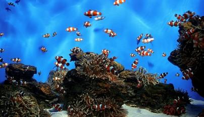 reproduccion peces
