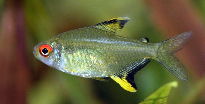 reproduccion peces1