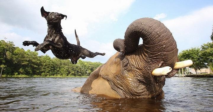 Amistades animales