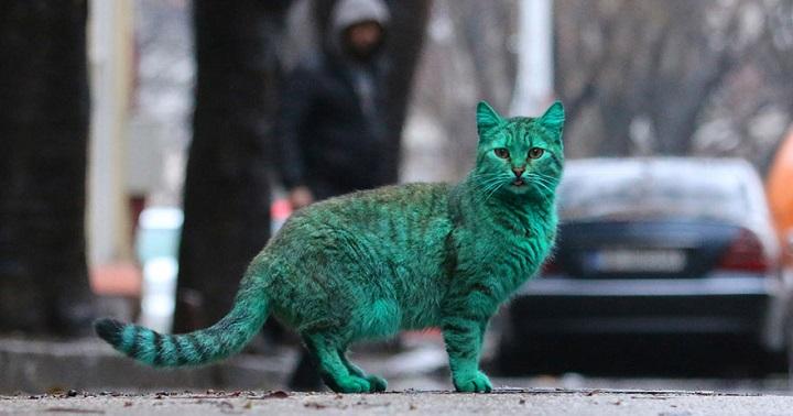 Gato verde Varna