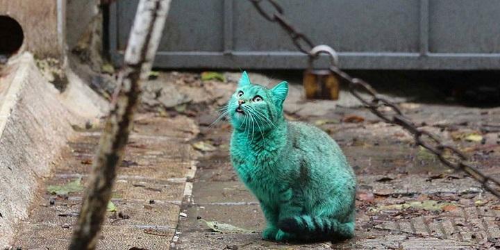 Gato verde Varna1