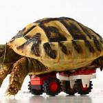 Silla de ruedas para tortugas con piezas de LEGO