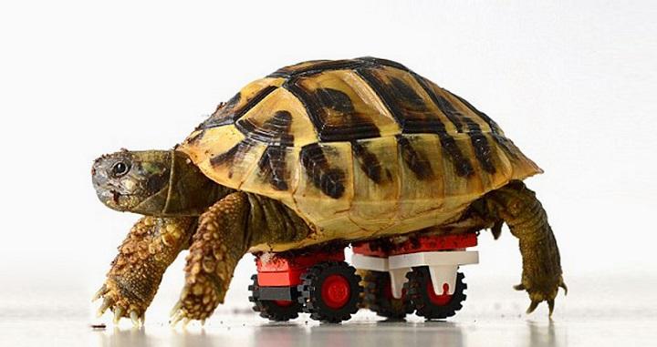 Silla de ruedas tortuga LEGO