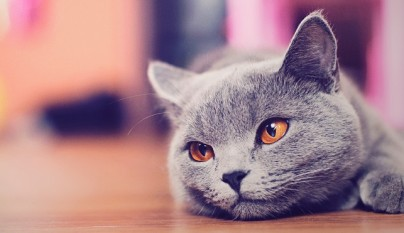 comunicacion gato