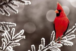 Cómo cuidar a los pájaros en invierno