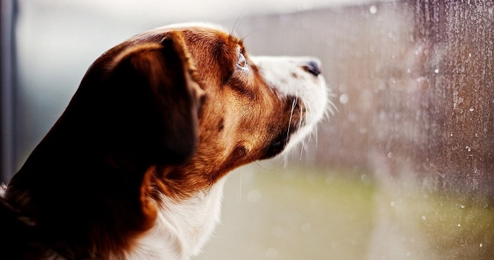 perros tormenta