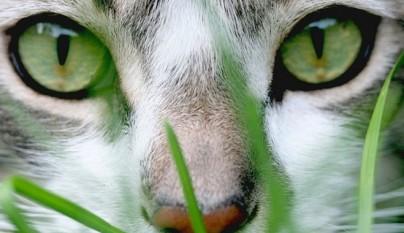Envenenamiento en gatos for Plantas toxicas gatos