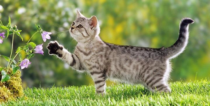plantas toxicas gatos1