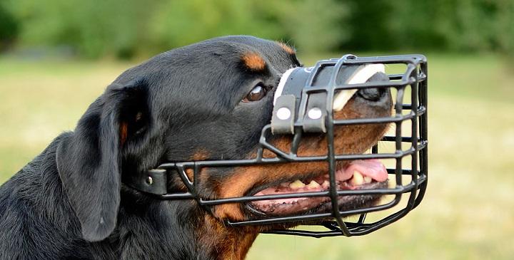 poner bozal perro1