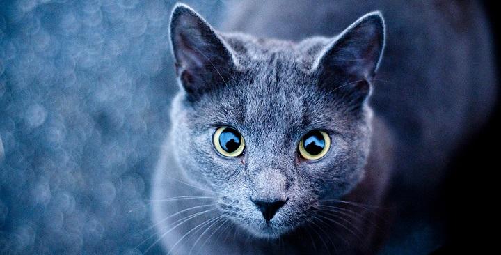vista gatos1