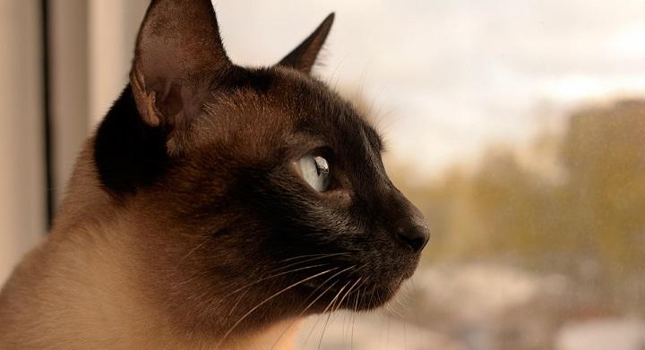 Gatos longevos