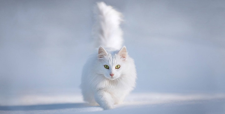 Gatos longevos1