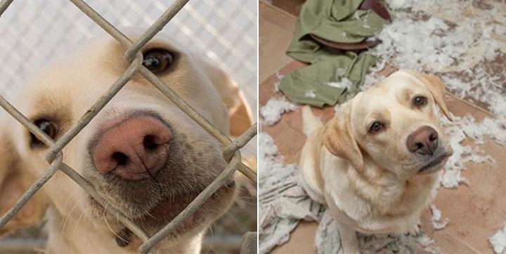 antes y despues de ser adoptados1