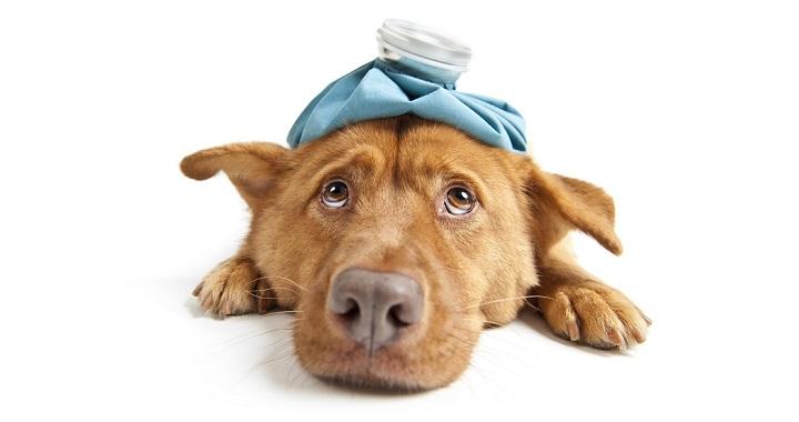 automedicar perros