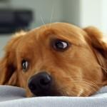 La vivienda perfecta para el perro
