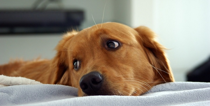 casa perfecta perro