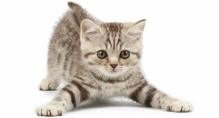 evitar gato se escape
