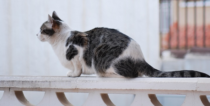 evitar gato se escape1