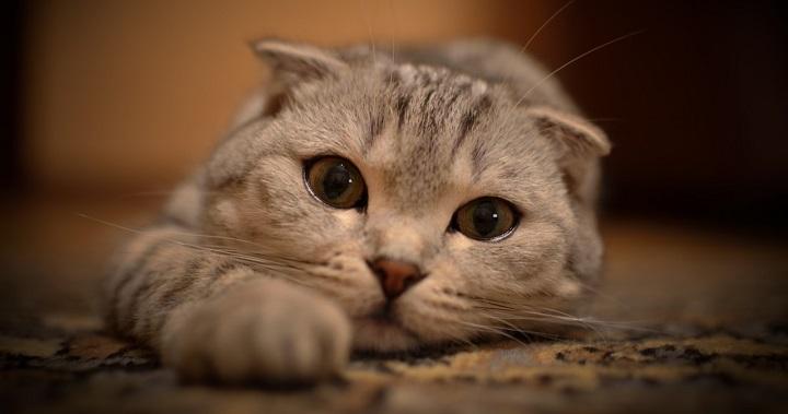 gato que no come