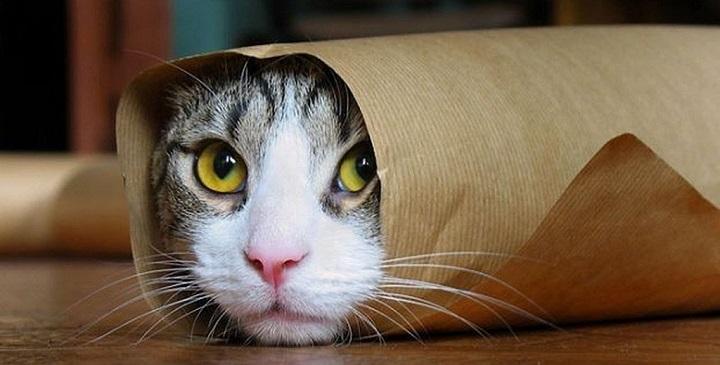 gatos graciosos fotos