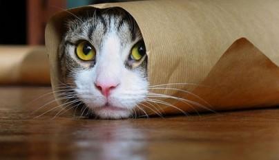 gatos graciosos1