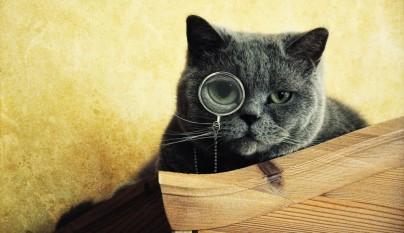 gatos graciosos11