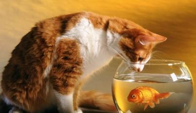 gatos graciosos13