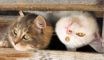 gatos graciosos14