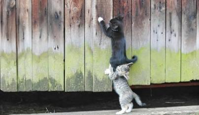 gatos graciosos16