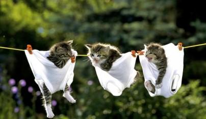 gatos graciosos17