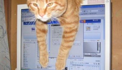 gatos graciosos24