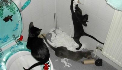gatos graciosos26
