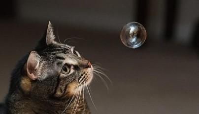 gatos graciosos27