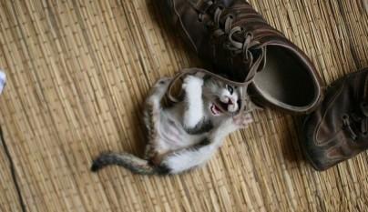 gatos graciosos28