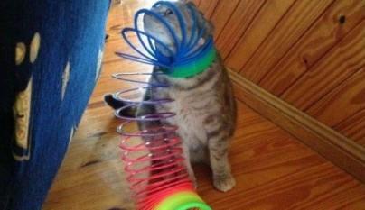 gatos graciosos31
