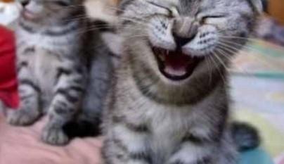 gatos graciosos32