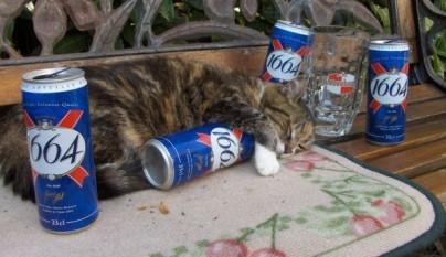 gatos graciosos33