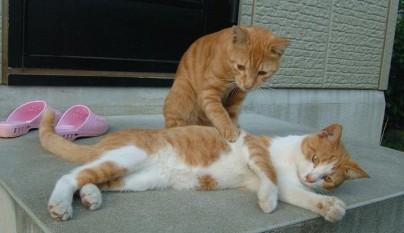 gatos graciosos34