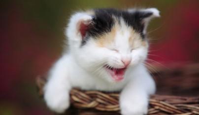 gatos graciosos5