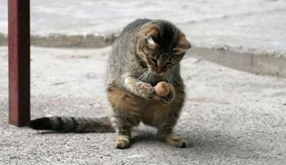gatos graciosos7