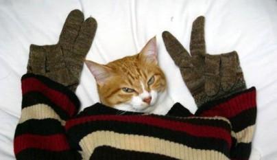 gatos graciosos8
